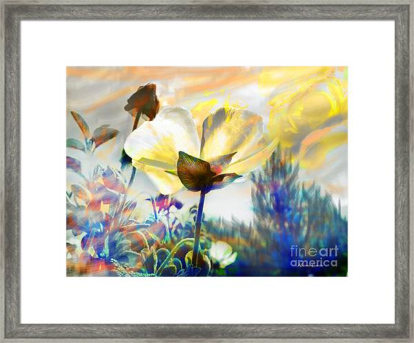 Atardecer En Primavera Framed Print