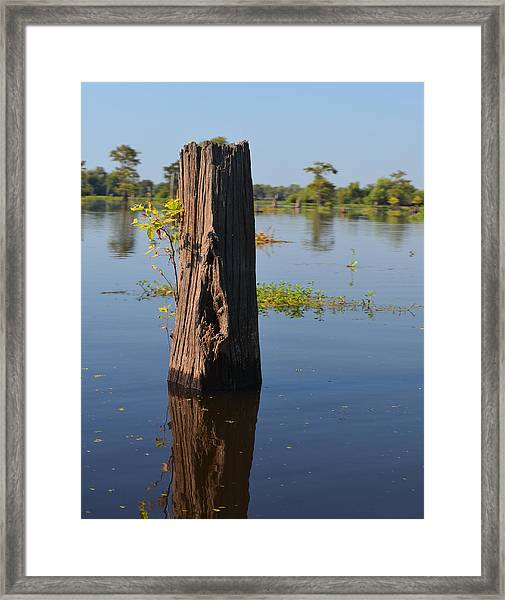 Atchafalaya Basin 22 Framed Print