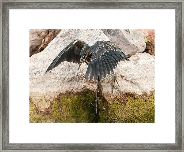 Attack Mode Framed Print