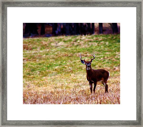 Attentive Buck Framed Print