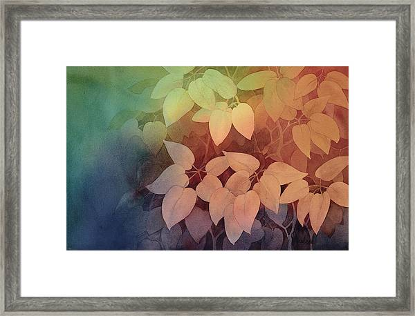August II Framed Print
