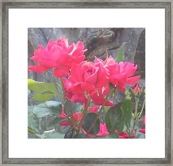 Austin Roses Framed Print