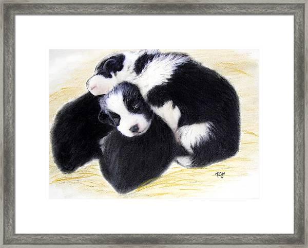 Australian Cattle Dog Puppies Framed Print
