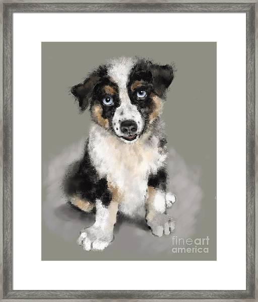 Australian Shepherd Pup Framed Print