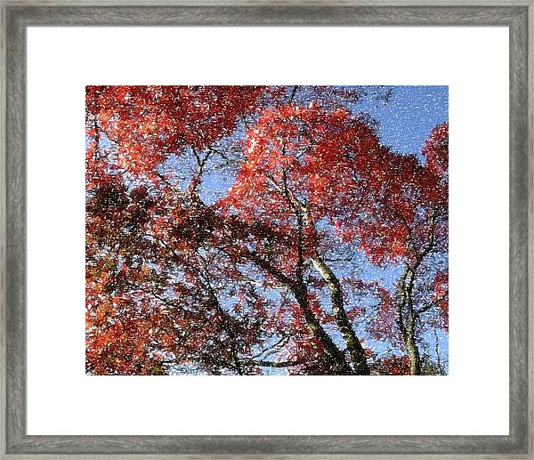 Autum Trees Illustrated Framed Print