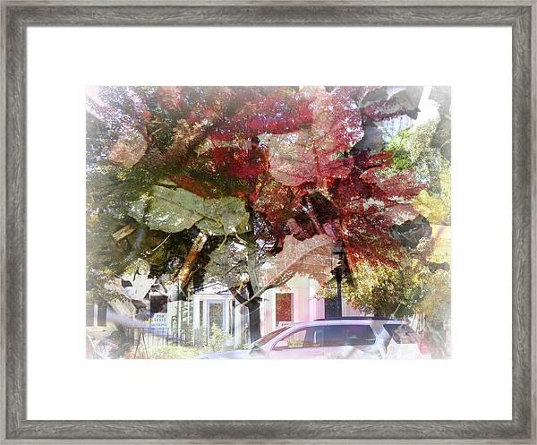 Autumm Framed Print
