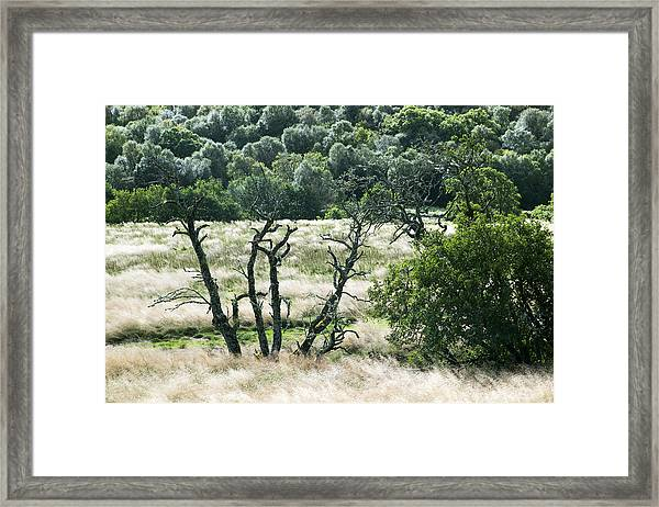 Autumn And Grass In Isle Of Skye, Uk Framed Print
