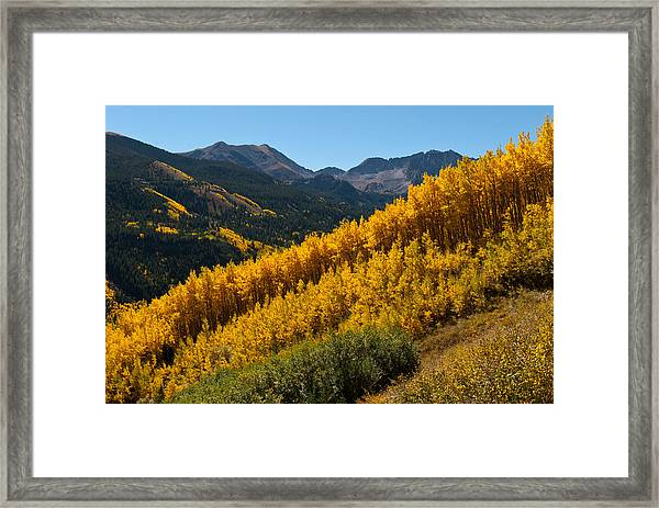 Autumn Aspen Near Castle Creek Framed Print