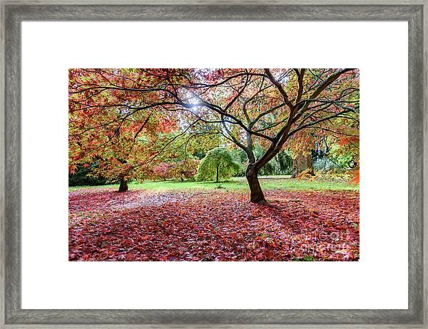 Autumn At Westonbirt Arboretum Framed Print
