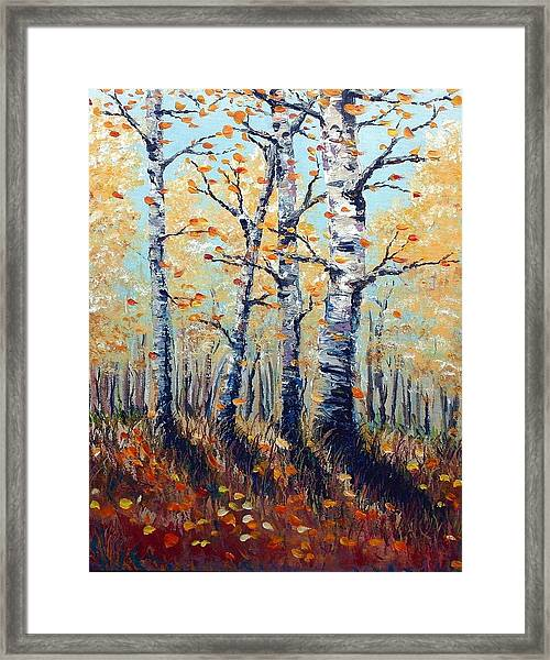 Autumn Birch Framed Print by Wesley Pack