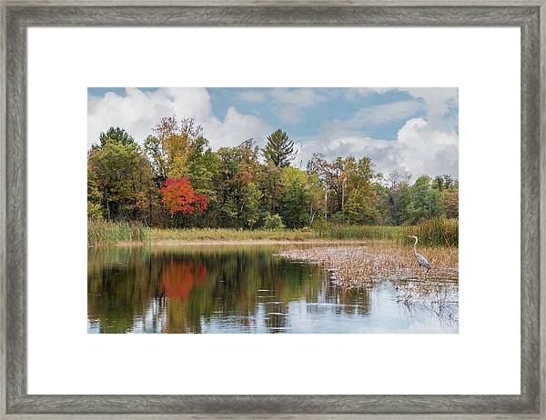 Framed Print featuring the photograph Autumn Blue Heron by Patti Deters