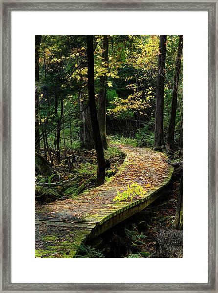 Autumn Boardwalk Framed Print