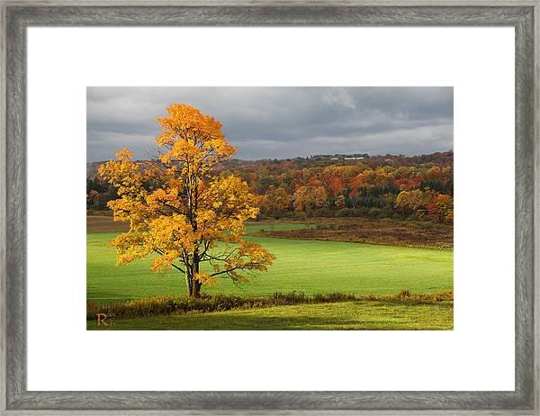 Autumn Colors Framed Print