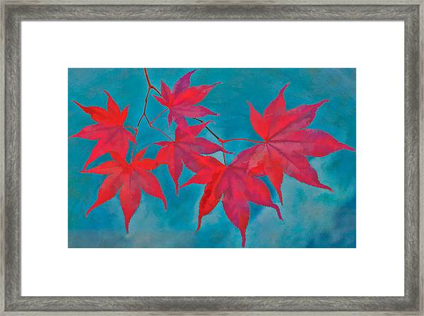 Framed Print featuring the photograph Autumn Crimson by William Jobes