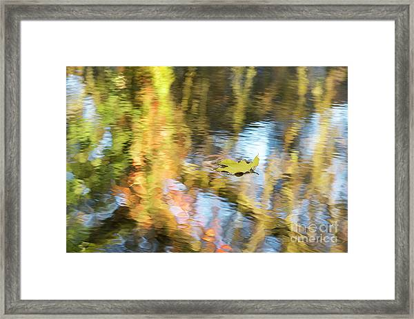 Autumn Drift Framed Print