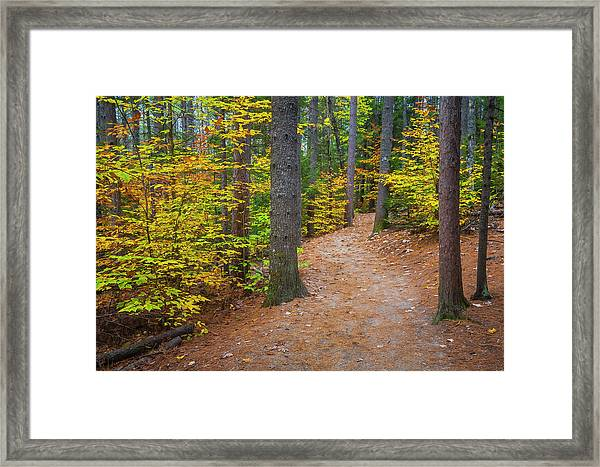 Autumn Fall Foliage In New England Framed Print