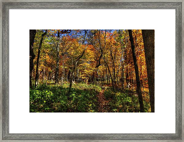 Autumn Forest Path At Johnson's Mound Framed Print