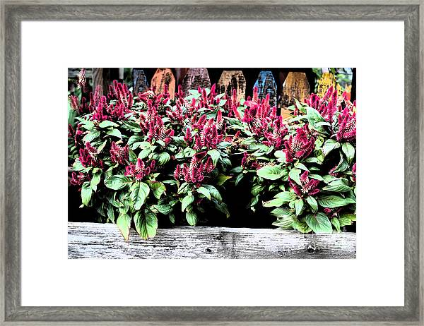 Framed Print featuring the painting Autumn Fowers 9-11-15 by Mas Art Studio