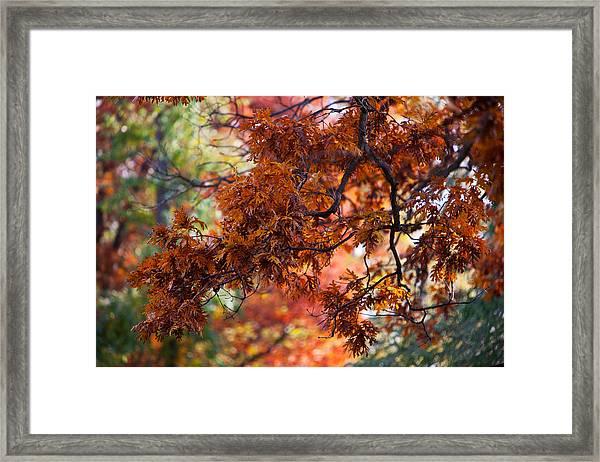 Autumn Fury Framed Print