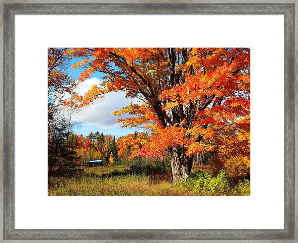 Framed Print featuring the photograph Autumn Glory by Gigi Dequanne