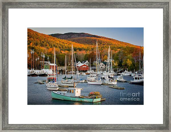 Framed Print featuring the photograph Autumn Gold by Susan Cole Kelly