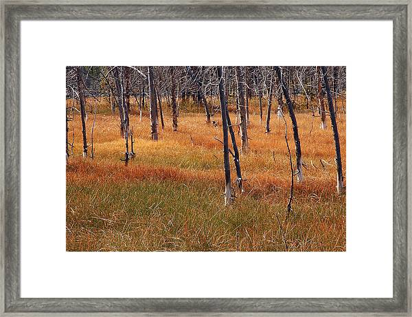 Autumn Grasses In Yellowstone Framed Print