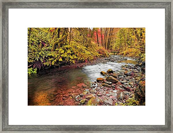 Autumn Sunrise In An Oregon Rain Forest  Framed Print