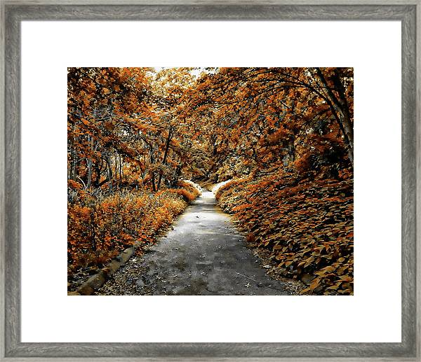 Autumn In Stamford Framed Print