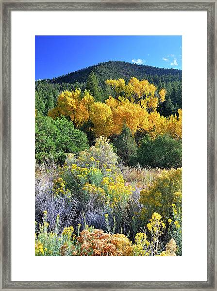 Autumn In The Canyon Framed Print