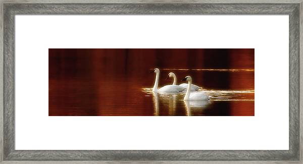 Autumn Jewel Framed Print