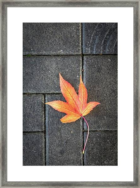 Autumn Leaf Framed Print
