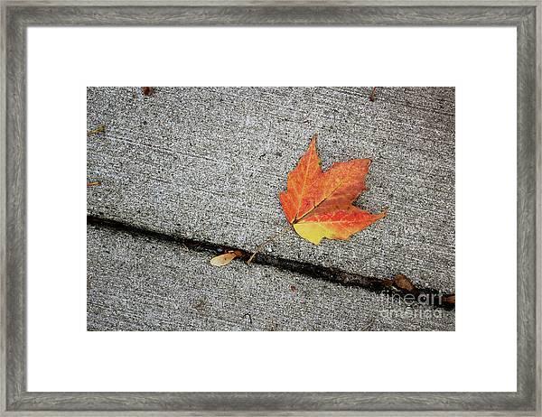 Autumn Leaf Framed Print
