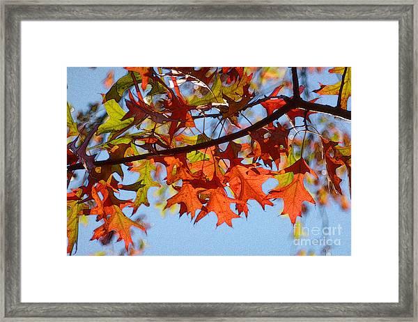 Autumn Leaves 16 Framed Print