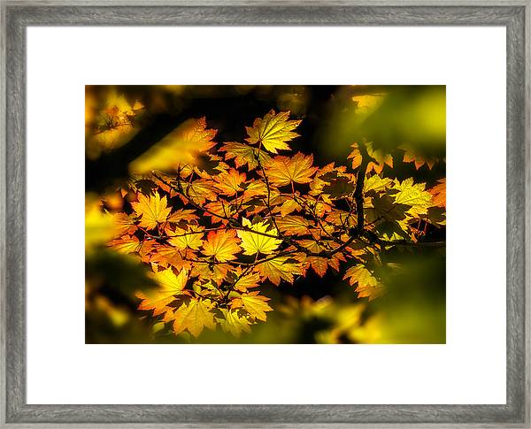 Framed Print featuring the photograph Autumn Leaves by Claudia Abbott