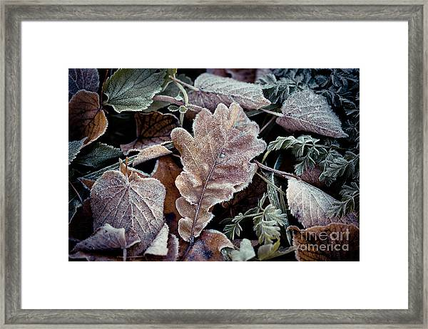 Framed Print featuring the photograph Autumn Leaves Frozen Artmif.lv by Raimond Klavins