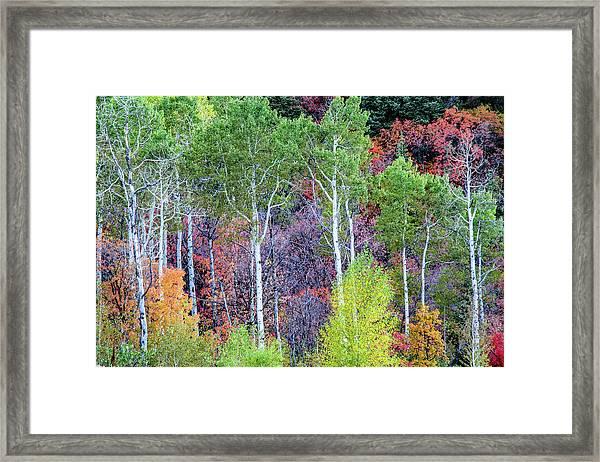 Autumn Mix Framed Print