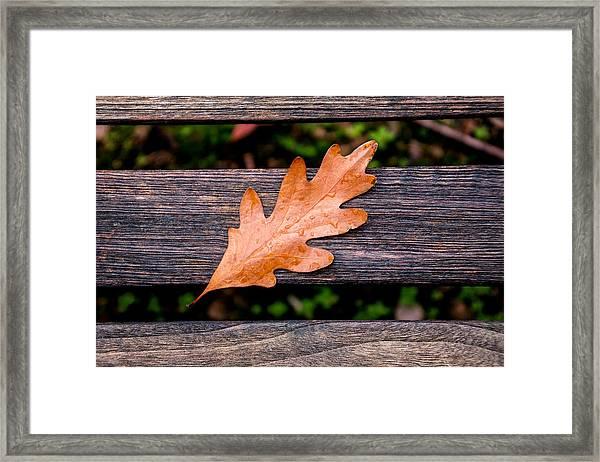 Autumn Oakleaf On Bench Framed Print