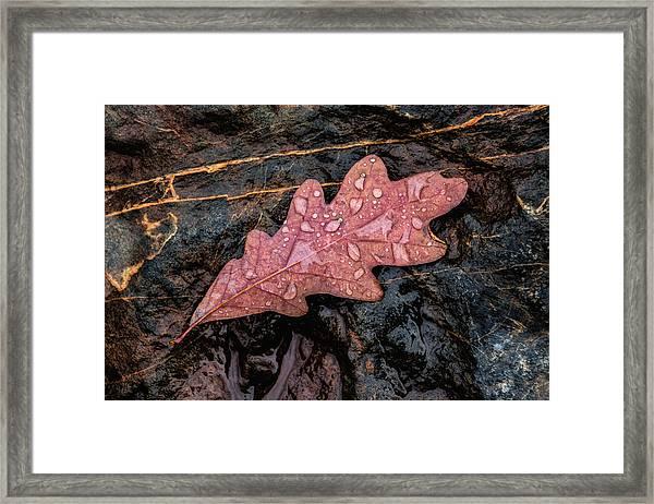 Autumn Oakleaf On Rock Framed Print