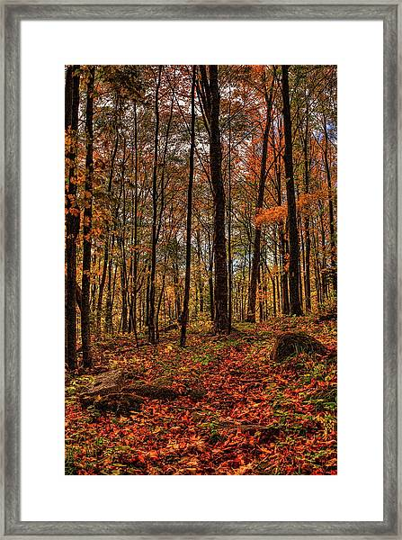 Autumn On The Ice Age Trail Framed Print