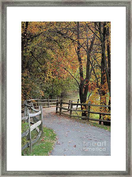 Autumn Path In Park In Maryland Framed Print