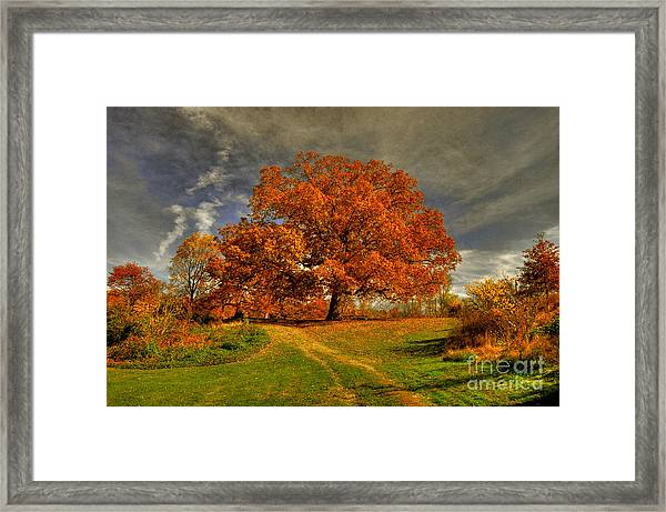 Framed Print featuring the photograph Autumn Picnic On The Hill by Lois Bryan