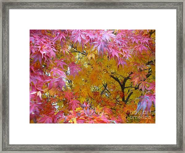 Autumn Pink Framed Print