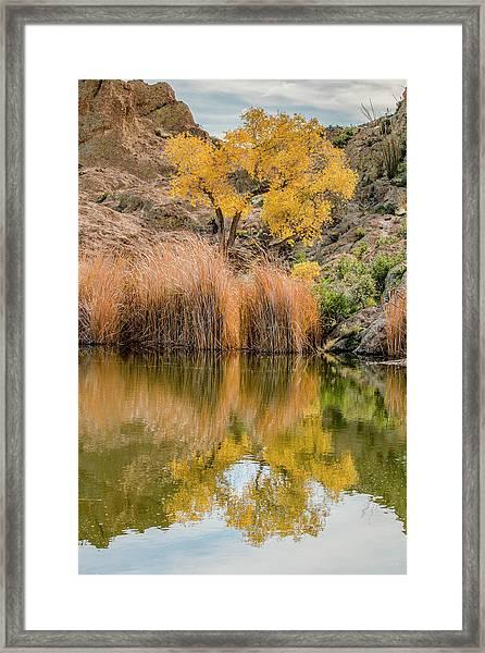 Autumn Reflection At Boyce Thompson Arboretum Framed Print