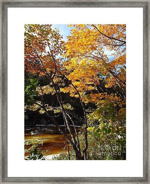 Framed Print featuring the photograph Autumn River by Barbara Von Pagel