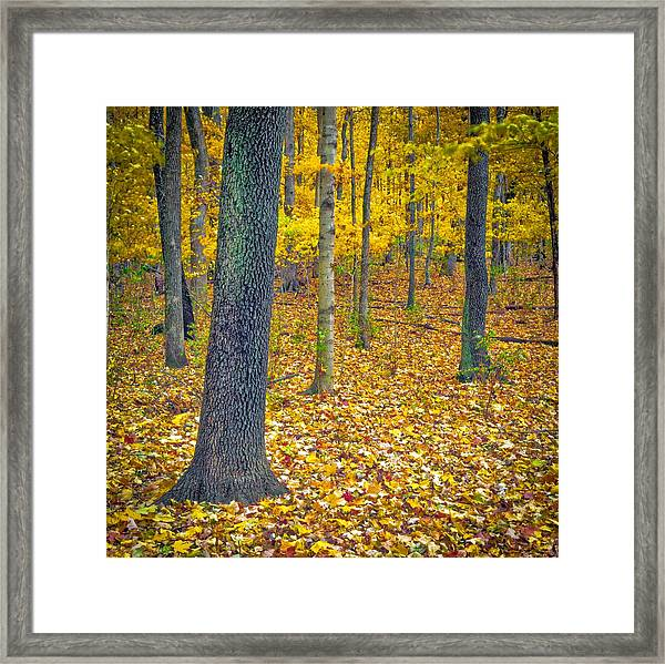 Framed Print featuring the photograph Autumn by Samuel M Purvis III