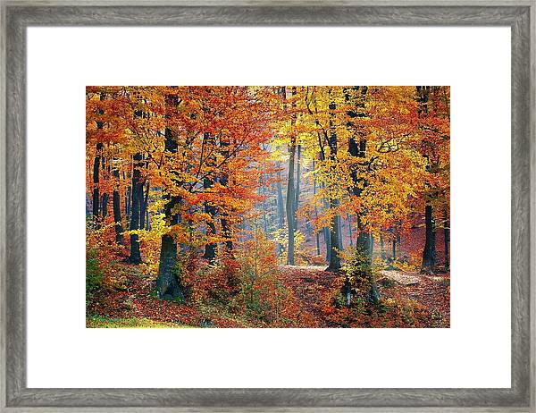 Autumn Splendour Framed Print