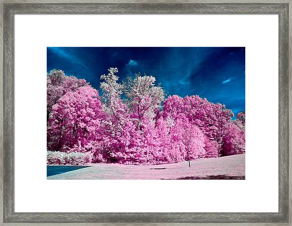 Autumn Trees In Infrared Framed Print
