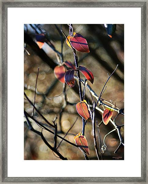 Autumn Vine Framed Print