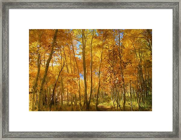 Autumn Walk Among The Aspens Framed Print