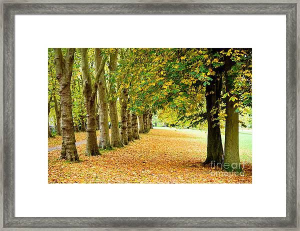 Autumn Walk Framed Print